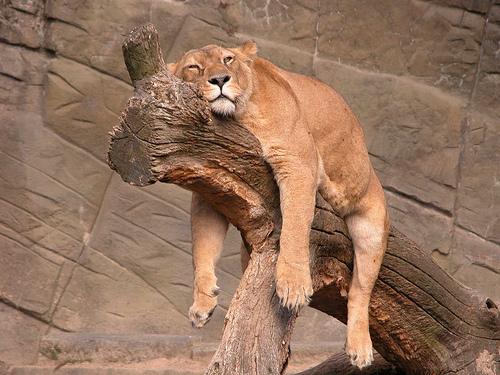 come dormire comodi